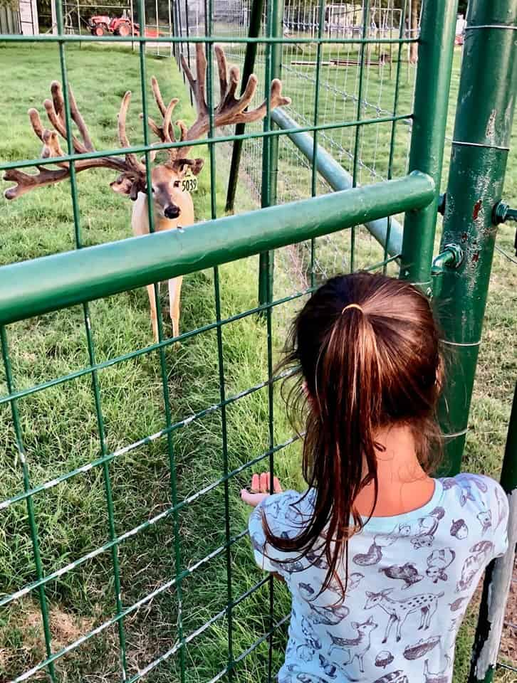 Breeder buck McNificent and granddaughter Annie on the Texas deer farm.